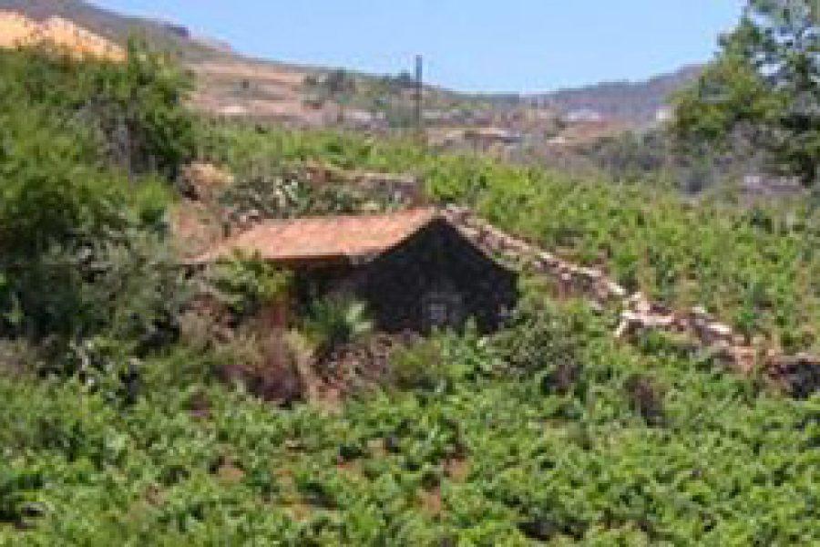 Gran Canaria estudia un innovador sistema para convertir el agua que generan los hogares en apta para uso agrícola