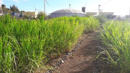 Continúa la experimentación en la parcela demostrativa de reutilización de aguas regeneradas en el Sureste de Gran Canaria